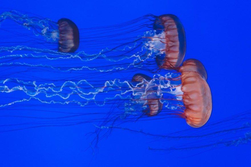 Медуза фото картинки средиземного моря большая красивые лучшие смотреть онлайн бесплатно