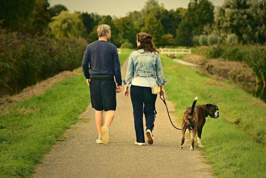 Улучшение памяти прогулки внимание концентрация
