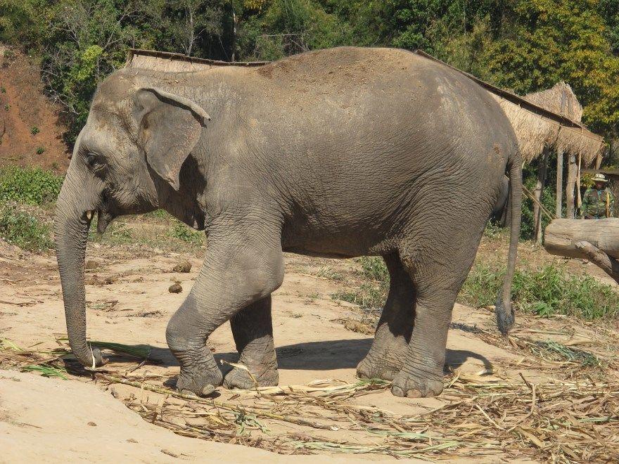 рисунок слон поэтапно для ребенка карандашом бесплатно