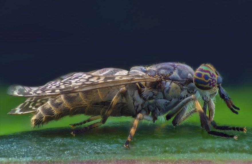 фото насекомых с названиями России домашние