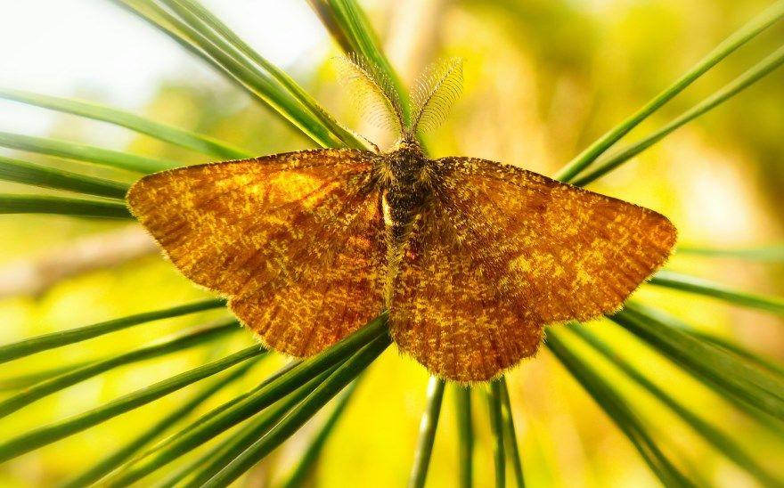 Бабочка ночная фото в России Саратов Москва мотылек насекомое скачать бесплатно