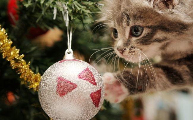 Кошки, коты и котята в новый год скачать бесплатно