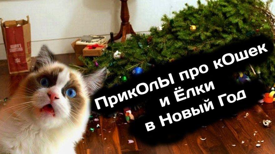 кошки новый год елка приколы картинки видео фото