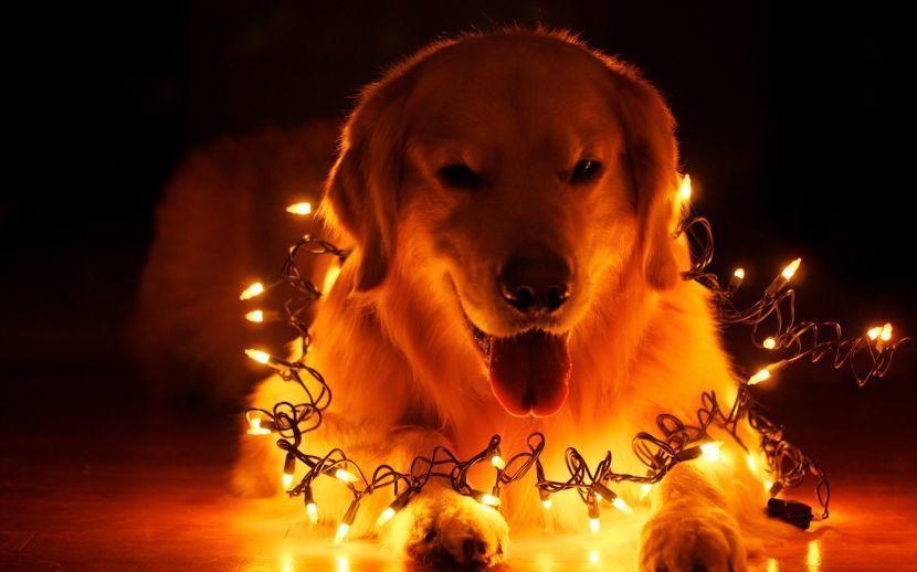 Собаки щенки новый год 2018 картинки скачать бесплатно