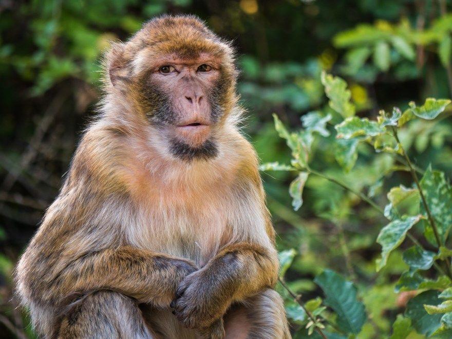 обезьяна фото картинки смешные прикольные маленькие скачать бесплатно онлайн носатая рыжая
