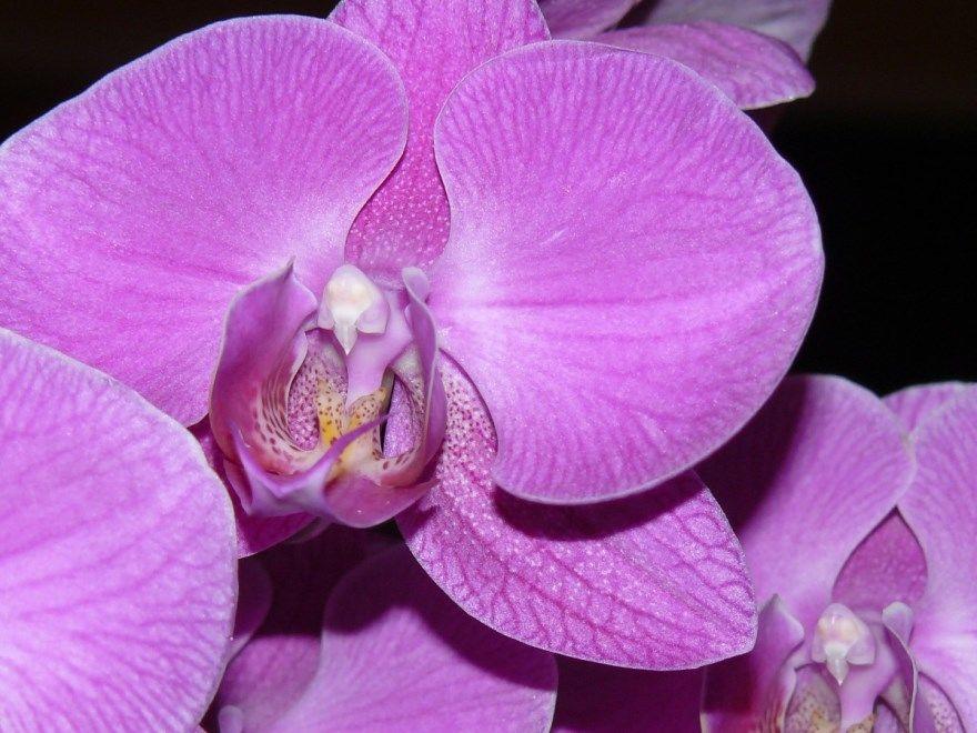Орхидея фото картинки скачать бесплатно с листьями в горшке домашних условиях дома фаленопсис