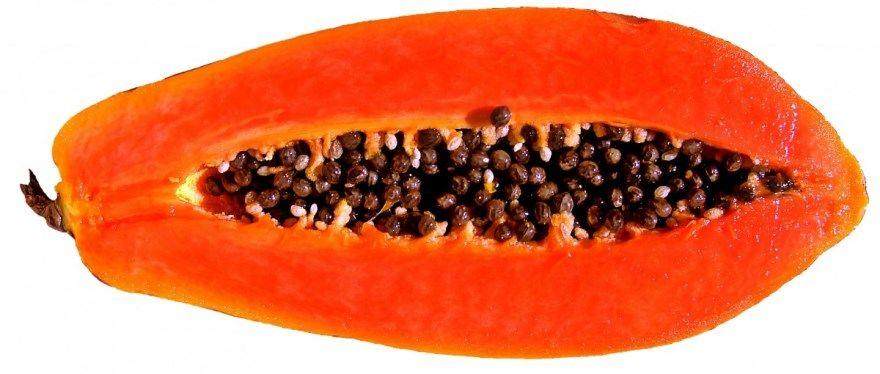 папайя фрукт растение фото картинки смотреть купить магазин польза полезное для организма бесплатно