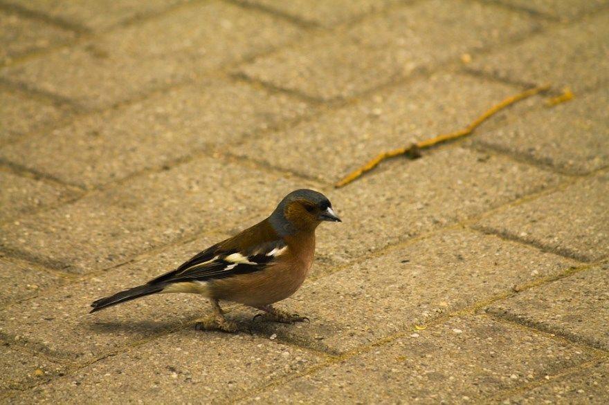 Птица певчая фото картинки животное скачать онлайн красивые крылья бесплатно лучшие
