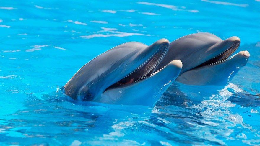 Дельфин фото онлайн черный скачать бесплатно официальный красивый смотреть