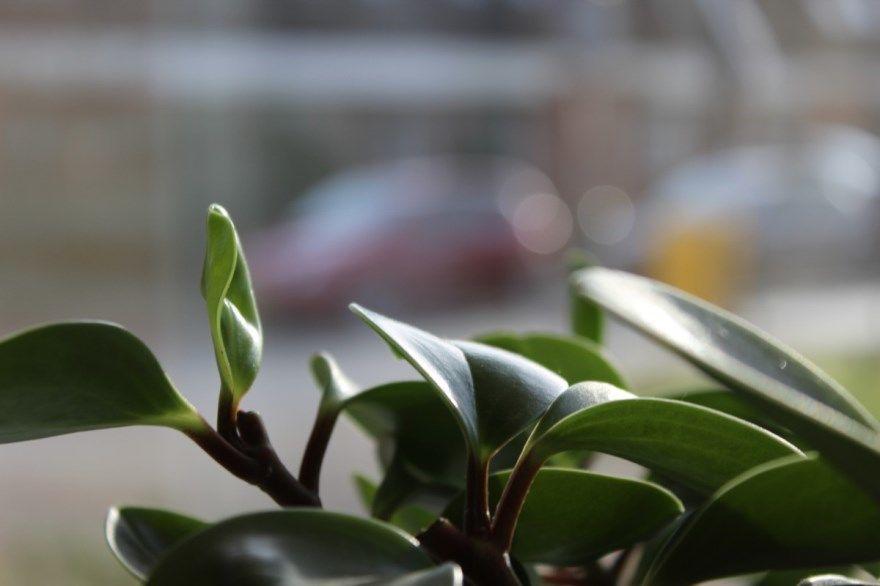 Комнатные растения фото картинки цветущие вьющиеся выращенные лунный календарь 2019 год бесплатно домашние