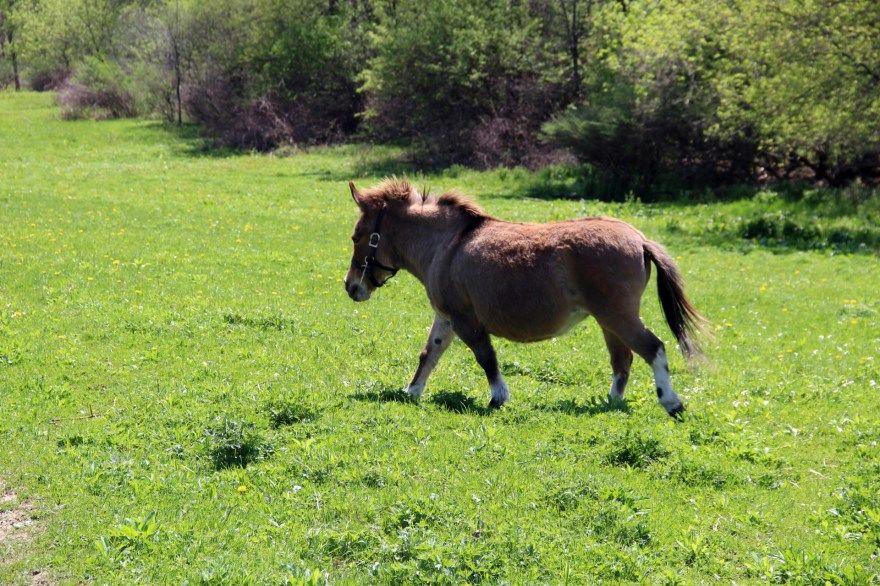 пони фото картинки красивое животное скачать бесплатно онлайн