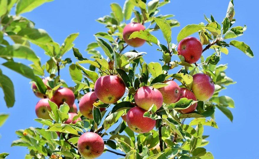 Яблочный спас в 2020 году, в России какого числа? Ответ найдете у нас на странице. Красивые картинки, фото к празднику.