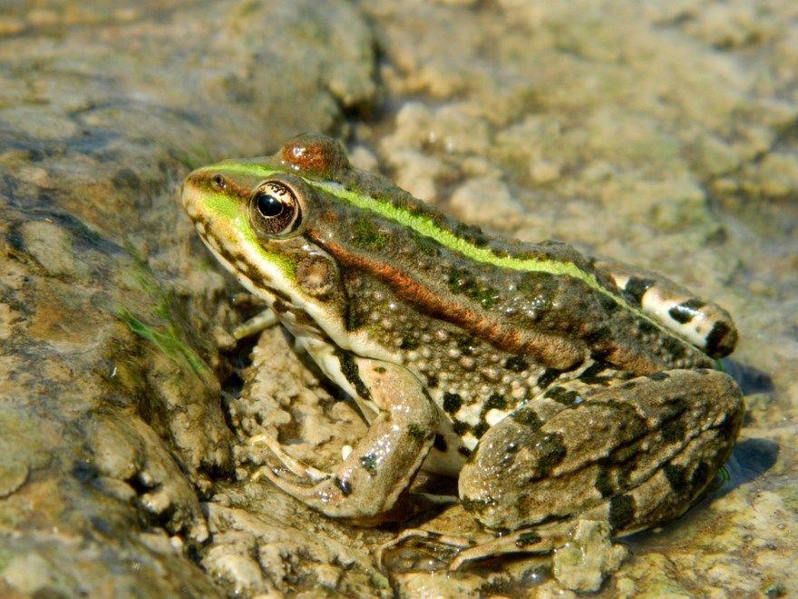 фото рептилий виды скачать красивые с названиями