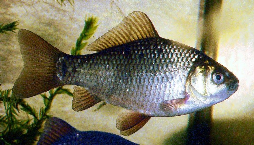 фото рыб названиями описание России морские речные