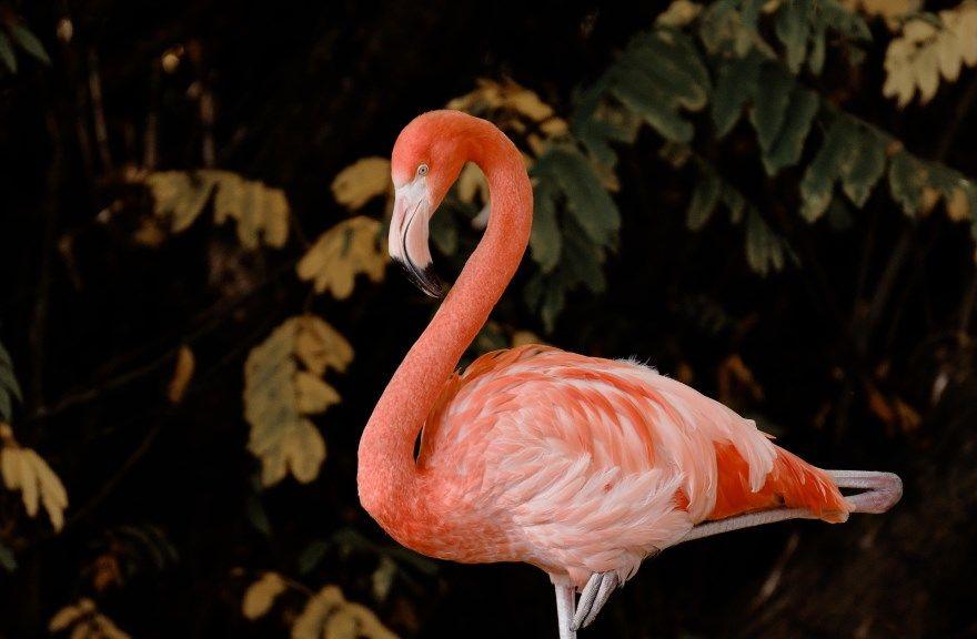 фламинго розовый фото картинки для детей купить красивые лучшие скачать онлайн бесплатно смотреть