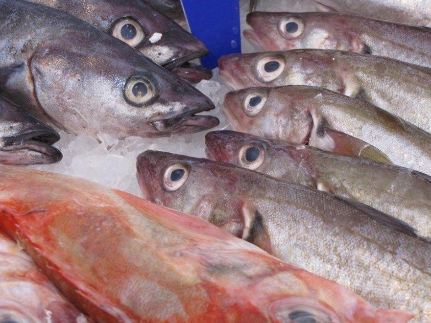 Сельдь рыба животное фото картинки рецепт вкусный приготовление купить бесплатно скачать смотреть онлайн