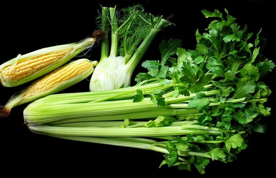 Сельдерей рецепты салат корень польза стебель вред суп фото картинки для похудения яблоком корень полезные свойства курица приготовление пюре купить очень вкусный сыр на зиму