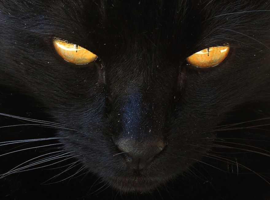 Кошка белая черная скачать бесплатно торрент женщина фильм мышки собаки 4 симулятор