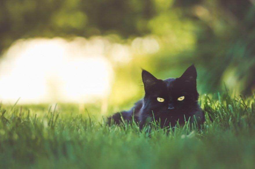 Кошки самые большие маленькие красивые ласковые умные дорогие лушие крупные дорогие до слез видео какая в мире