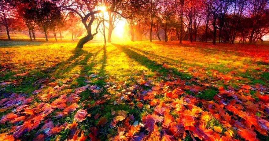 читать стихи для детей про осень красивое короткое детские класс поэтов наизусть длинный смешные