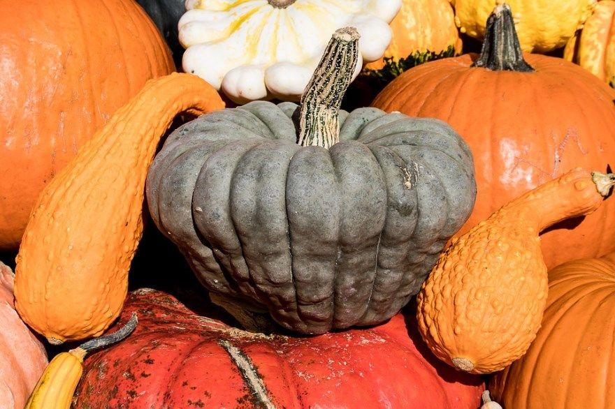 Тыква рецепты в духовке на хэллоуин запеченная вкусное фото блюда мультиварке польза суп пюре поделки на зиму