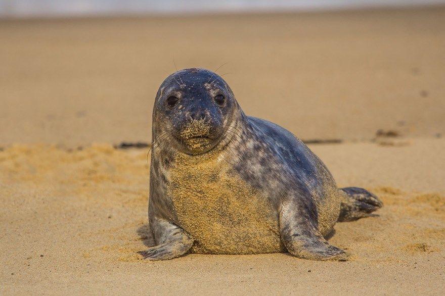 Тюлень фото картинки животное смотреть скачать онлайн бесплатно купить лучшие в хорошем качестве