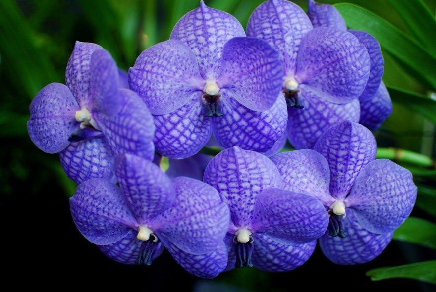 Ванда фото уход москва отзывы интернешнл тур орхидея официальный сайт туроператор нары песня видео имя групп купить
