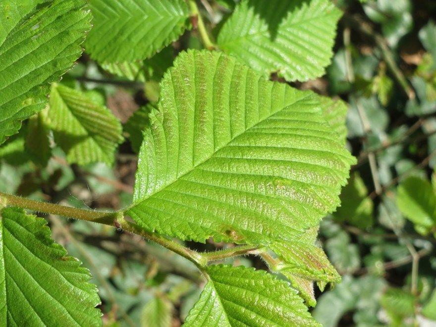 Вяз дерево листья скачать онлайн улица кошмар фильм 2010 смотреть фото 2 3 сны 4 5 1