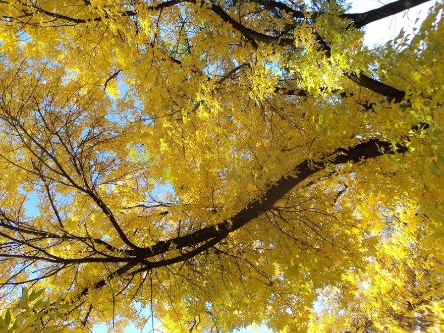 Ясень валентину шимо фото светлый купить цвет листья белый дерево темный доска дуб мебель листья массив цвет шкаф иваново где лдсп какой ламинат мебельный цвет